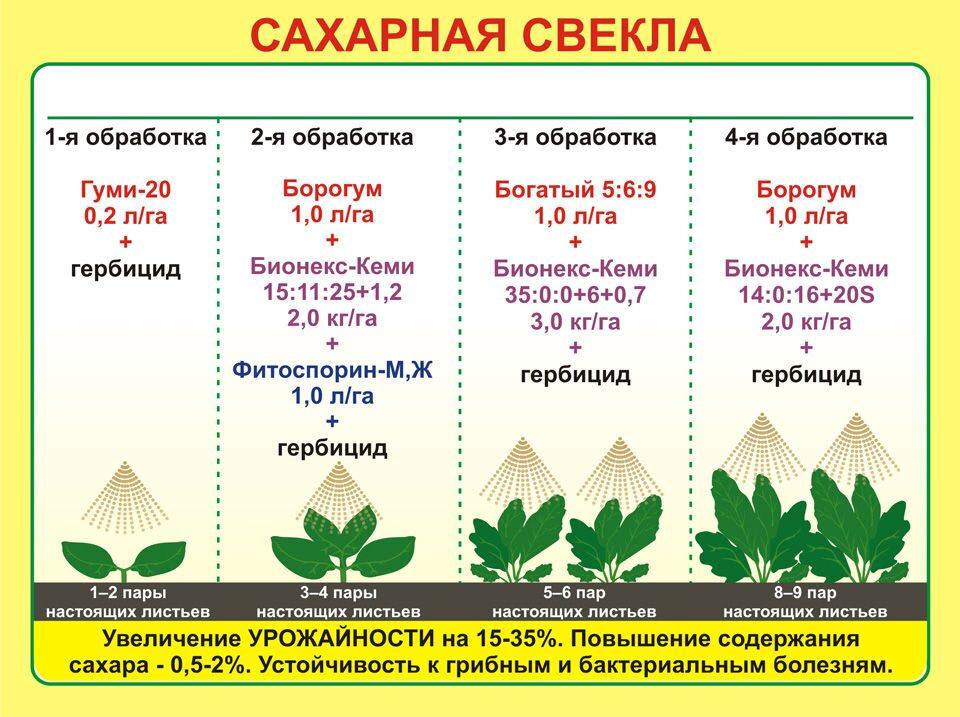 Технология выращивания сахарного буряка 45