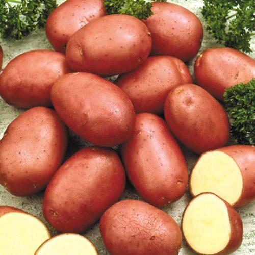 где можно купить семена картофеля